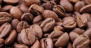Kaffebohnen enthalten viel Coffein